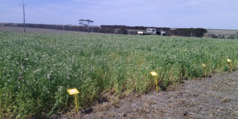 Nutrient systems trial for agricultural sustainability in the Western Fitzgerald Biosphere