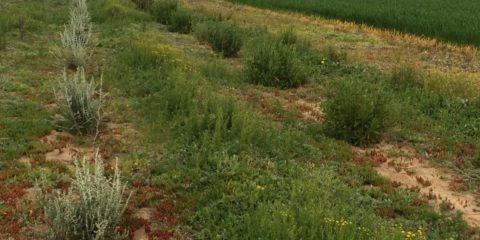 Integrated grazing and cropping systems to soil type