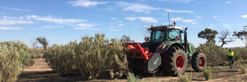 Improving the Productivity of Old Saltbush Stands, Site 2