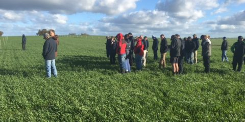 Comparing tillage practices to address non-wetting soils in the Corrigin area