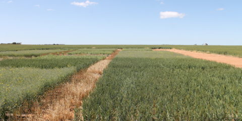 Understanding the implications of rotations in a low rainfall zone (Practice for Profit Trial)